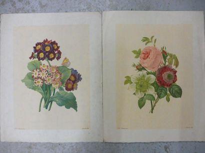 REDOUTE (d'après) ''études de fleurs'' – 6 gravures en couleurs 43 x 32 cm