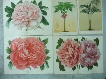 STROOBANT éditeur à GAND – 14 gravures de plantes et de fleurs en couleurs