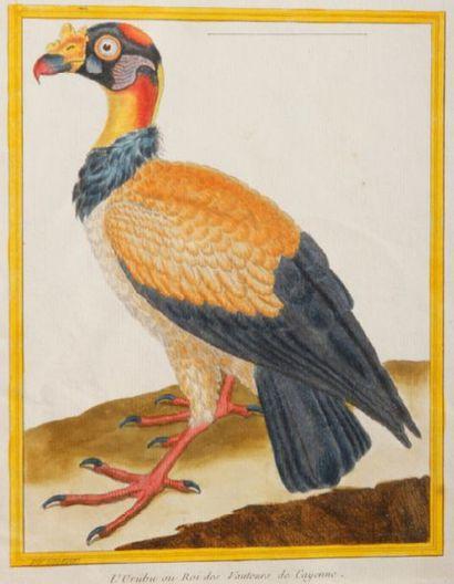 D'après François Nicolas MARTINET (1725-1804) Oiseaux Vingt et une eaux-fortes couleurs,...