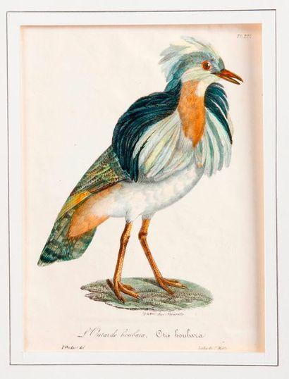D'après Jacques BARRABAND (1768-1809) et divers