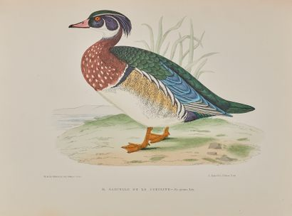 LA BLANCHÈRE (Henri de) : Les oiseaux gibier....