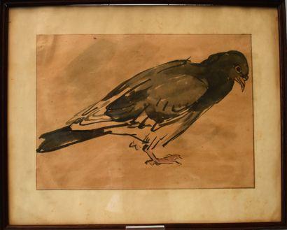 LOT : DESSIN au lavis et aquarelle : Le pigeon...