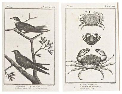 BUFFON (Leclerc, comte de), BRISSEAU-MIRBEL (C.F.), SONNINI (C.S.), DENYS-MONTFORT, LA TREILLE (P.A.