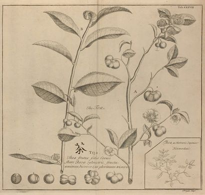 JAPON. Kaempfer (E.) Histoire naturelle,...