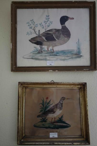 Deux sous-verre en plumes : Canard et bécasse....