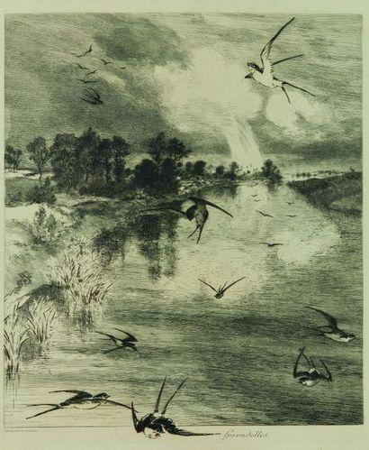 Félix BRACQUEMOND (1833 - 1914) : Hirondelles....