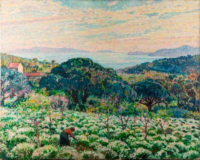 Théo VAN RYSSELBERGHE (1862-1926)  Champ d'Anthémis (Saint-Clair, Var)  Huile sur...