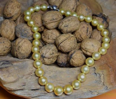 Important collier de perles GOLD (South sea)...
