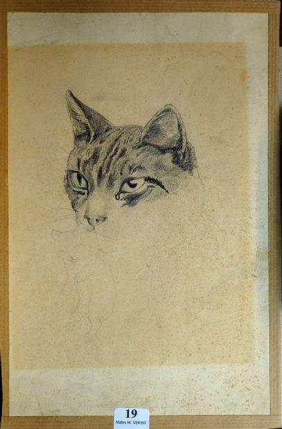 19- Ecole Romantique  ''Etude de chatte et...