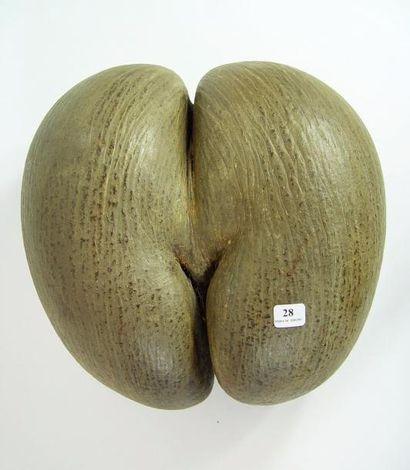 Coco fesse Hauteur: 28 cm