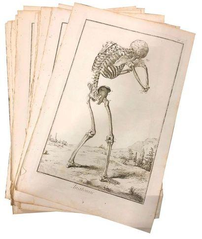 Lot de 14 planches d'anatomie