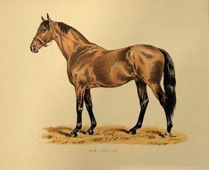 Lot de 50 gravures et planches sur les chevaux...