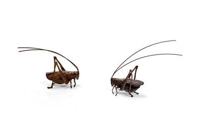 JAPON - XXe siècle Deux petits okimono en bronze à patine brune figurant deux grillons....