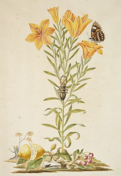 GIO ANTONIO BOTTIONE Lys des montagnes (Lilium Gulbiferum) papillon, scarabée et...
