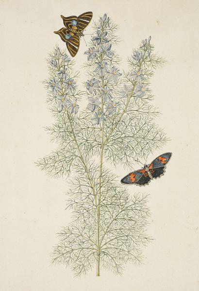 GIO ANTONIO BOTTIONE Dauphinelles des champs (Consolida Delfinium) et papillons Aquarelle...