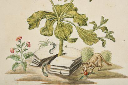 GIO ANTONIO BOTTIONE Chrysanthèmes (Crisantheum cristallinum), serpent, papillon...