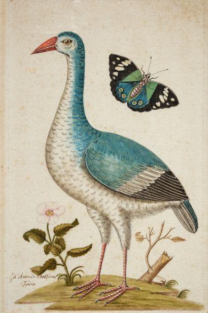 GIO ANTONIO BOTTIONE (act. 1770-1807 au jardin botanique de l'université de Turin)
