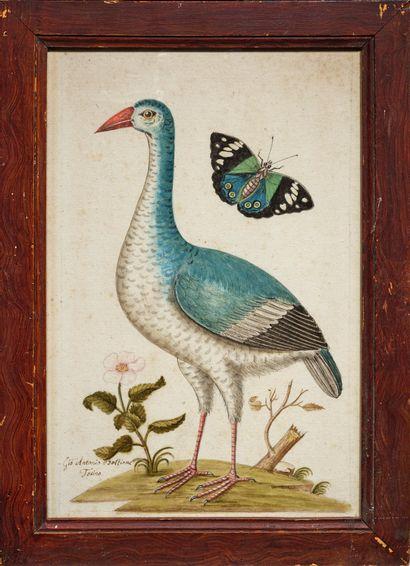 GIO ANTONIO BOTTIONE (act. 1770-1807 au jardin botanique de l'université de Turin)...