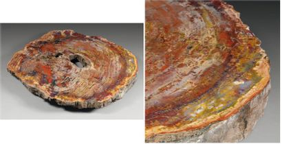 Tranche de bois fossile Trias, Arizona, U.S.A...