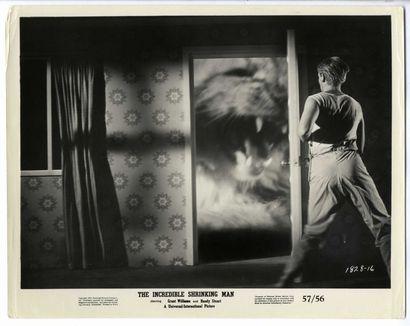 6 Photos originales - INCREDIBLE SHRINKING MAN (the) - 1957