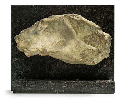Profil de chien Marbre blanc sculpté. Socle...