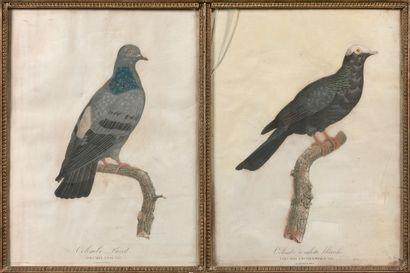 D'APRES PAULINE KNIP, (1781-1851) TEMMINCK...