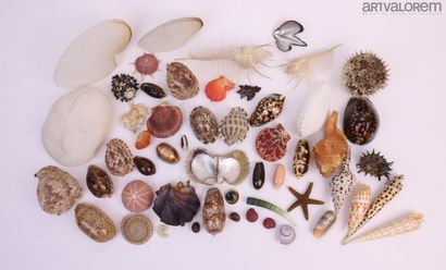 Important lot de divers et curiosités marines...