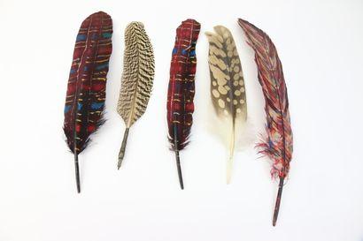 Quatre plumes teintées à chapeau. On joint...