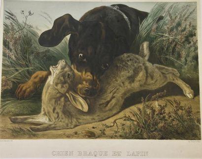 Albert ADAM (1833-1900)  Chien Braque et...