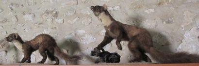 Ensemble d'animaux empaillés: deux martres,...
