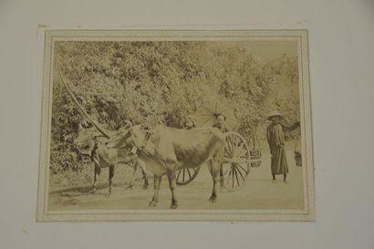 1885 Aurélien Pestel (1855-1897). Un ensemble...