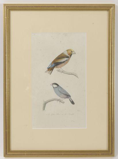 Lot de 5 gravures en couleur ou planches du dictionnaire universel d'histoire naturelle...
