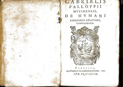FALLOPII (Gabrielis).