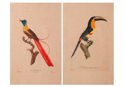 D'après Jacques BARRABAND (1768-1809)