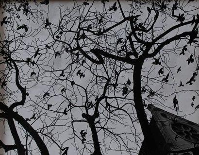 R. MENARD. Oiseaux, arbres, vol d'oiseaux....