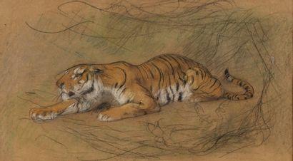 Gustave SURAND (Paris 1860 - 1937) Tigre...