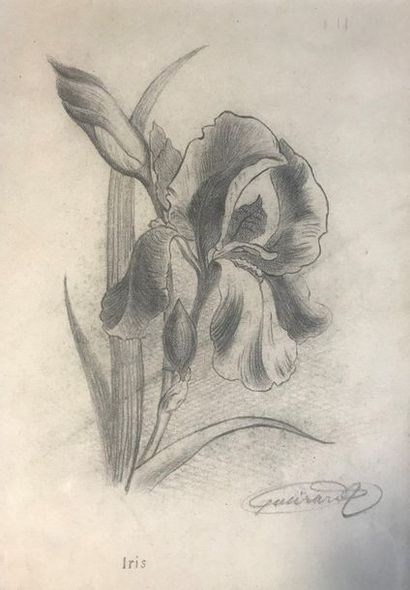 XXème  Iris  Crayon sur papier  Signature...
