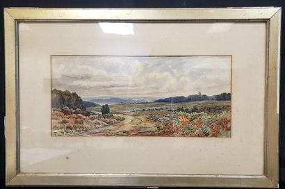 XXth  Charn Wood Forest (?)  Watercolor  Signed and dated lower left Sept 16th 81...