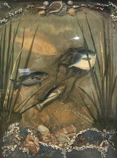 Aquarium  Collage figurant des poissons et...