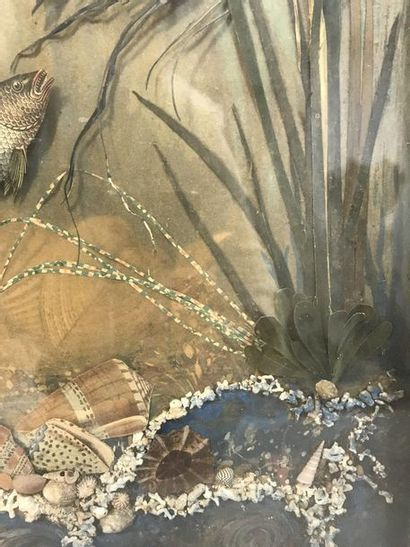 Aquarium  Collage depicting fish and shells in reeds, presented under glass and...