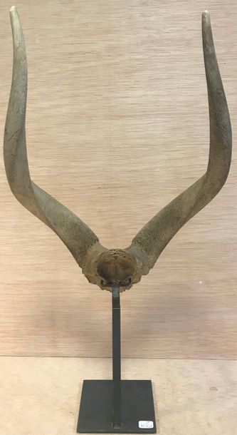 CURIOSITY  Deer massacre, presented on an iron stand  H. (without base): 50 cm -...
