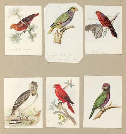 Album ornithologique Album contenant 74...