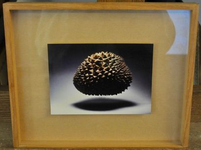 ECOLE FRANCAISE DU XXE Durian Photographie...