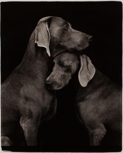 William WEGMAN (born 1943)  Friends, 2009  Pigmentary print on photo paper, proof...