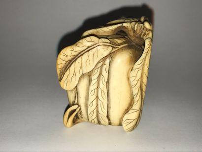 JAPON - Epoque EDO (1603 - 1868) Netsuke en ivoire* représentant une cucurbitacée....