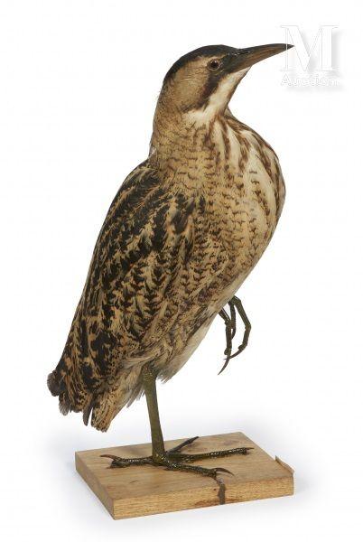 histoire naturelle Collection Joseph VÉDRINE 1883-1965 Et à divers [Paris, hôtel drouot]