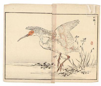 JAPON, XIXe siècle Ensemble de sept pages d'album figurant divers oiseaux au fil...