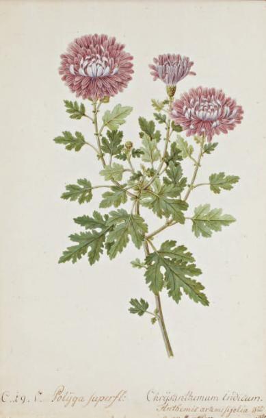 Martin Sedelmayer (1766 - Vienne 1799)