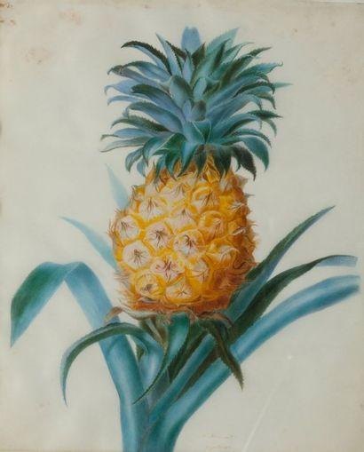 HENNESART (Actif au XIXème siècle) L?Ananas Aquarelle 47 x 33 cm Signé et daté en...