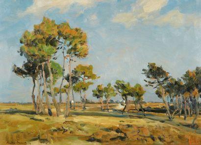 André DAUCHEZ (Paris 1870 - 1948) Paysage, les pins Huile sur panneau 34 x 46 cm...